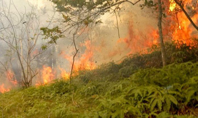 Kebakaran hutan di batam